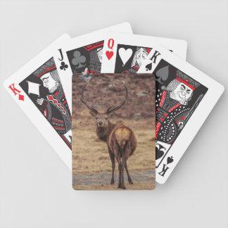 Naipes del macho del ciervo común barajas de cartas