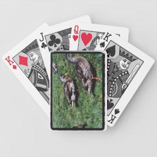 Naipes del pato silvestre cartas de juego