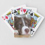 Naipes del perro del border collie de Brown Barajas De Cartas