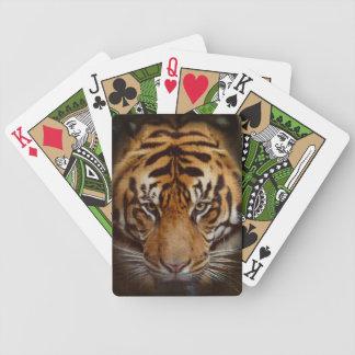 Naipes en peligro de la fauna del gato grande del  barajas de cartas