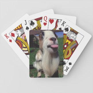 Naipes frescos de la cabra barajas de cartas