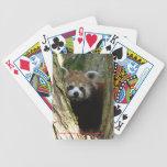 Naipes - panda roja baraja