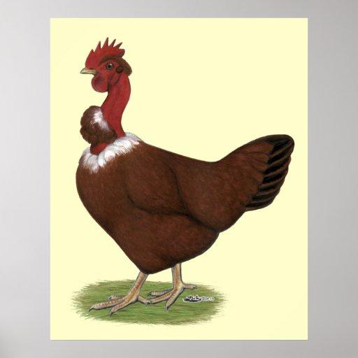 Naked-neck Hen Poster