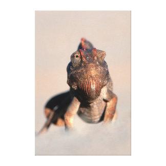 Namaqua Chameleon (Chamaeleo Namaquensis) Canvas Prints