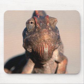Namaqua Chameleon (Chamaeleo Namaquensis) Mouse Pad