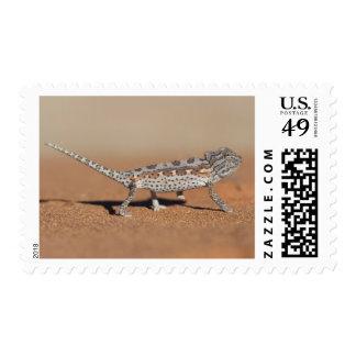 Namaqua Chameleon, Namib Desert, Namib-Naukluft Postage
