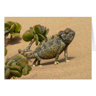 Namaqua Chameleon on Desert Sand with Jade Plant Card