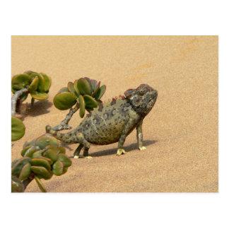 Namaqua Chameleon on Desert Sand with Jade Plant Postcard