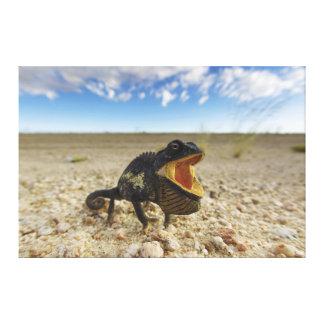 Namaquensis del Chamaeleo del camaleón de Namaqua Impresión En Lienzo