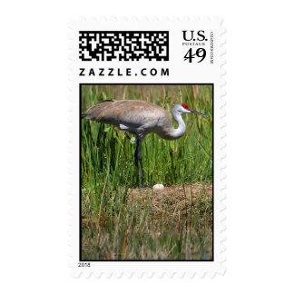 Name Your Postage postage stamp