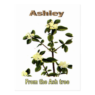 Ashley Name Meaning Gifts On Zazzle