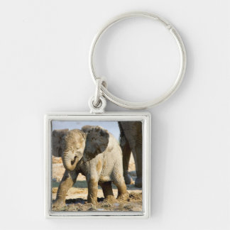 Namibia, Africa: Baby African Elephant Key Chains