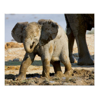 Namibia, Africa: Baby African Elephant Poster