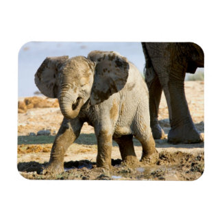 Namibia, Africa: Baby African Elephant Rectangle Magnets