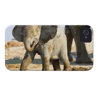 Namibia, África: Elefante africano del bebé iPhone 4 Fundas
