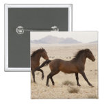 Namibia, Aus. Caballos salvajes que corren en el N Pin Cuadrada 5 Cm