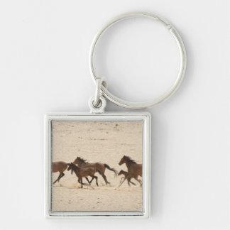 Namibia, Aus. Group of running wild horses on Keychain