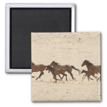 Namibia, Aus. Group of running wild horses on Magnet