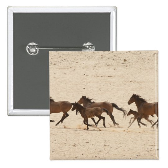Namibia, Aus. Group of running wild horses on Pinback Button