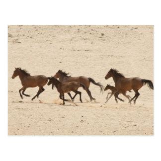 Namibia, Aus. Grupo de funcionar con caballos Postal