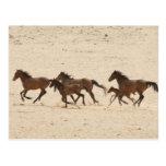 Namibia, Aus. Grupo de funcionar con caballos salv Postal