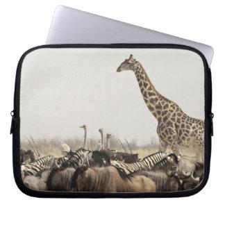Namibia, Etosha National Park. A lone giraffe Computer Sleeve