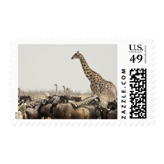 Namibia, Etosha National Park. A lone giraffe Postage Stamps