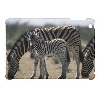 Namibia, Etosha National Park, Plain Zebra 1 Cover For The iPad Mini