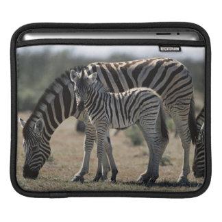 Namibia, Etosha National Park, Plain Zebra 1 Sleeve For iPads