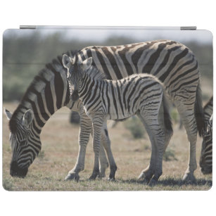 Namibia, Etosha National Park, Plain Zebra 1 iPad Smart Cover