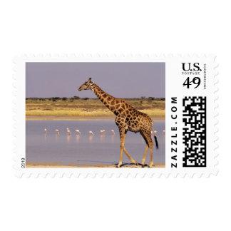Namibia: Etosha National Park Postage Stamp