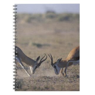 Namibia, Etosha National Park, Two male Notebook