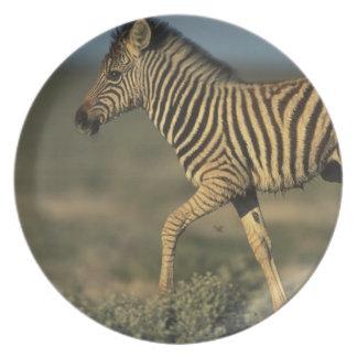 Namibia, Etosha National Park, Young Plains Dinner Plates
