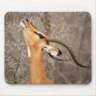 Namibia, Etosha NP.  Black Faced Impala Mouse Pad