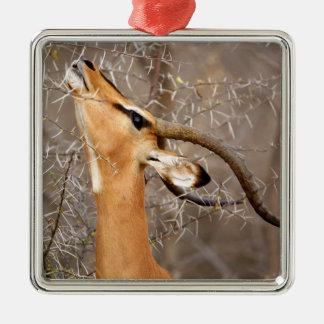 Namibia, Etosha NP.  Black Faced Impala Christmas Ornament