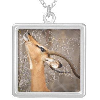 Namibia, Etosha NP.  Black Faced Impala Silver Plated Necklace