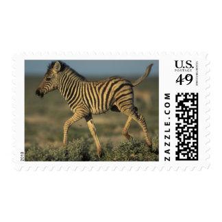 Namibia, parque nacional de Etosha, llanos jovenes Estampilla