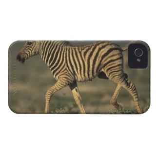 Namibia, parque nacional de Etosha, llanos jovenes iPhone 4 Case-Mate Cárcasas