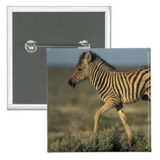 Namibia, parque nacional de Etosha, llanos jovenes Pin Cuadrado