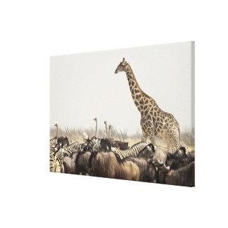 Namibia, parque nacional de Etosha. Una jirafa Lona Estirada Galerías