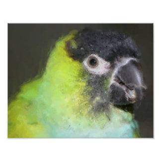 Nanday Conure Parrot Photo Painting Poster