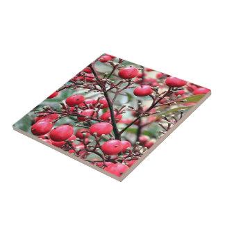 Nandina arbusto con las bayas maduras rojas azulejo cuadrado pequeño