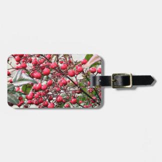 Nandina arbusto con las bayas maduras rojas etiquetas maleta