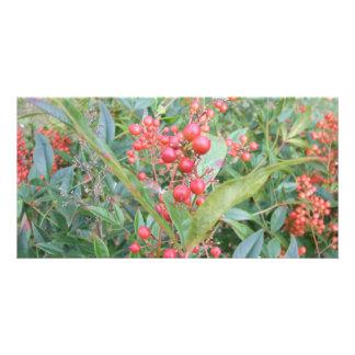 Nandina Berries Photo Cards