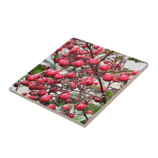 Nandina bush with red ripe berries small square tile
