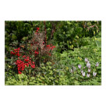 Nandina y flores del Cyclamen Poster