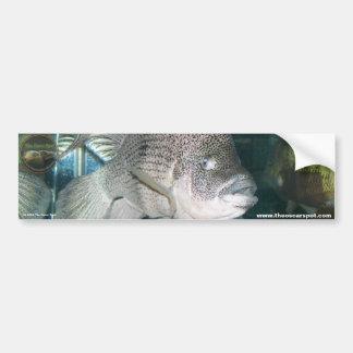 Nandopsis haitiensis car bumper sticker