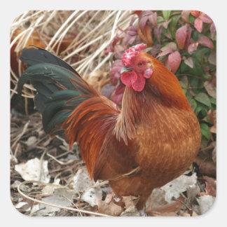 Nankin Bantam Chicken Square Sticker