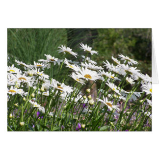 Nantucket Daisies Stationery Note Card
