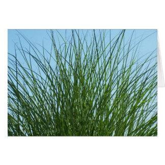 Nantucket Grass Greeting Card